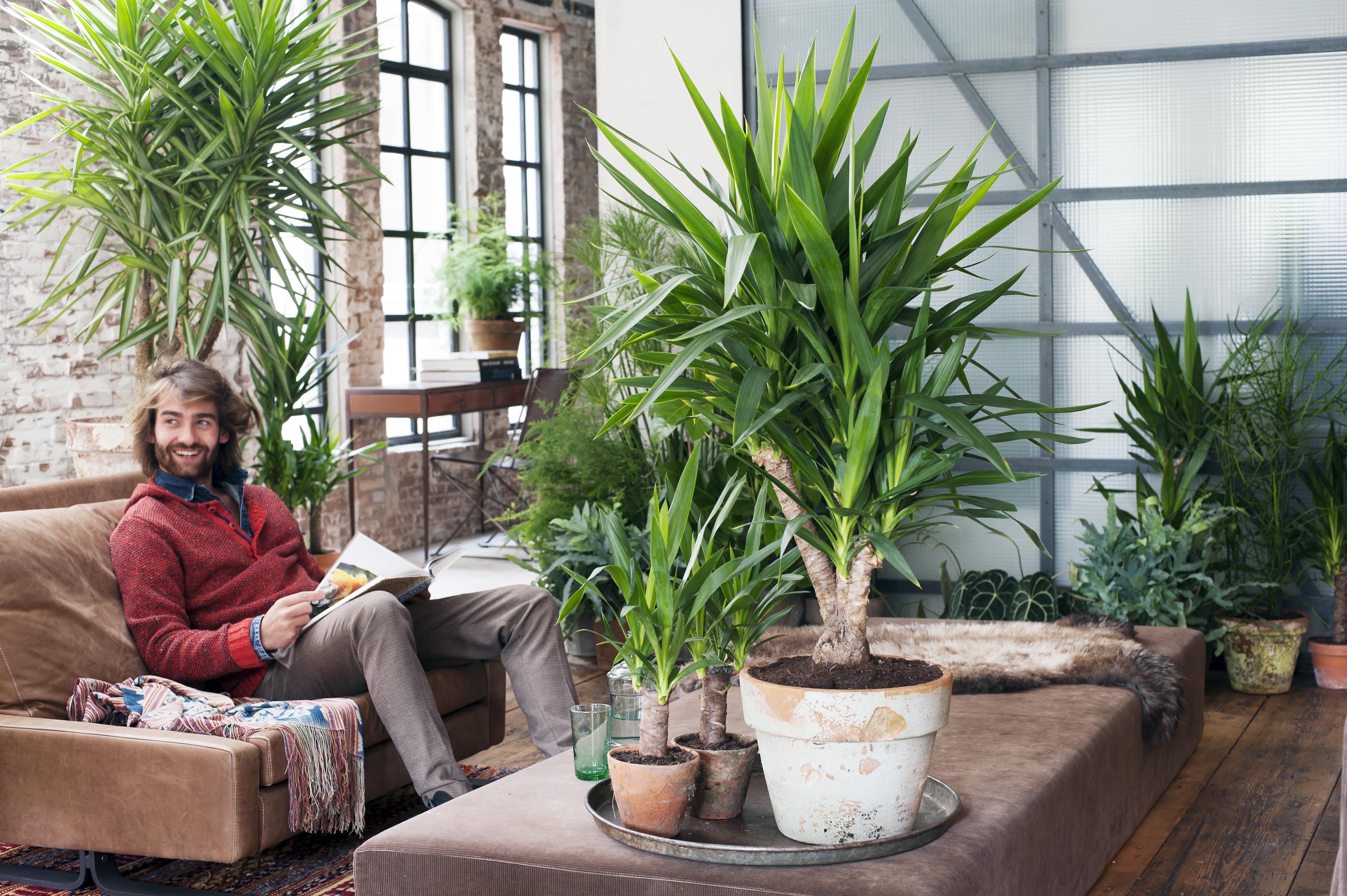 Le yucca a chaque mois sa plante janvier 2015 office for Plante haute interieur