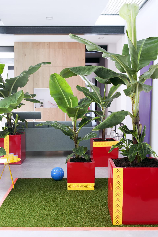 le bananier la plante d int rieur du mois d avril office des fleurs. Black Bedroom Furniture Sets. Home Design Ideas