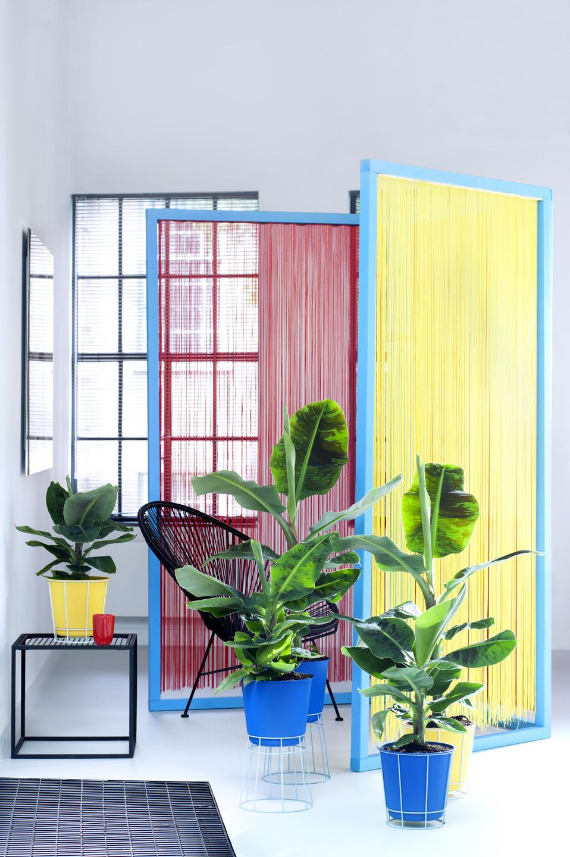 Le Bananier : la plante d\'intérieur du mois d\'avril   Office des Fleurs