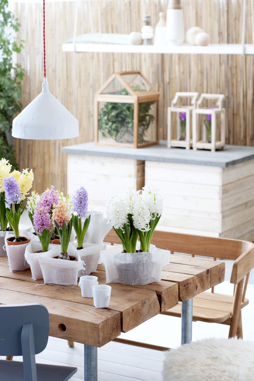 A Chaque Mois Sa Plante Decembre 2015 La Jacinthe Office Des Fleurs