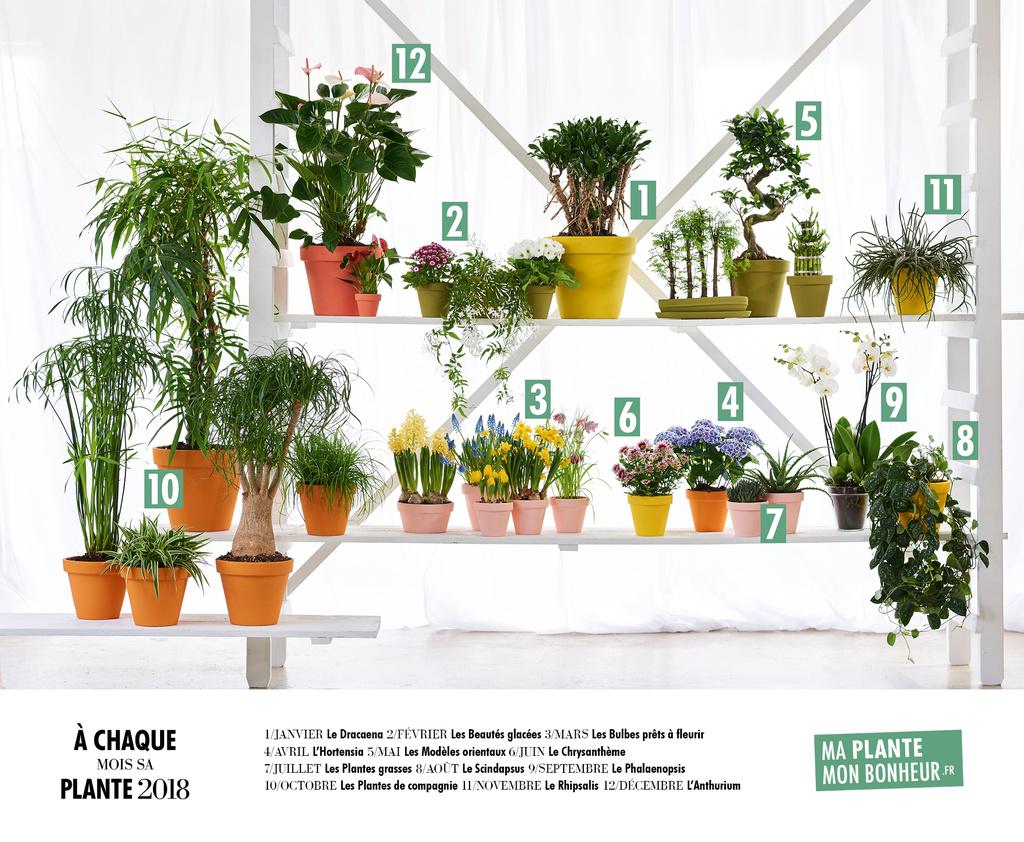 A chaque mois sa plante 2018 se pr sente office des fleurs for Site de vente de plantes