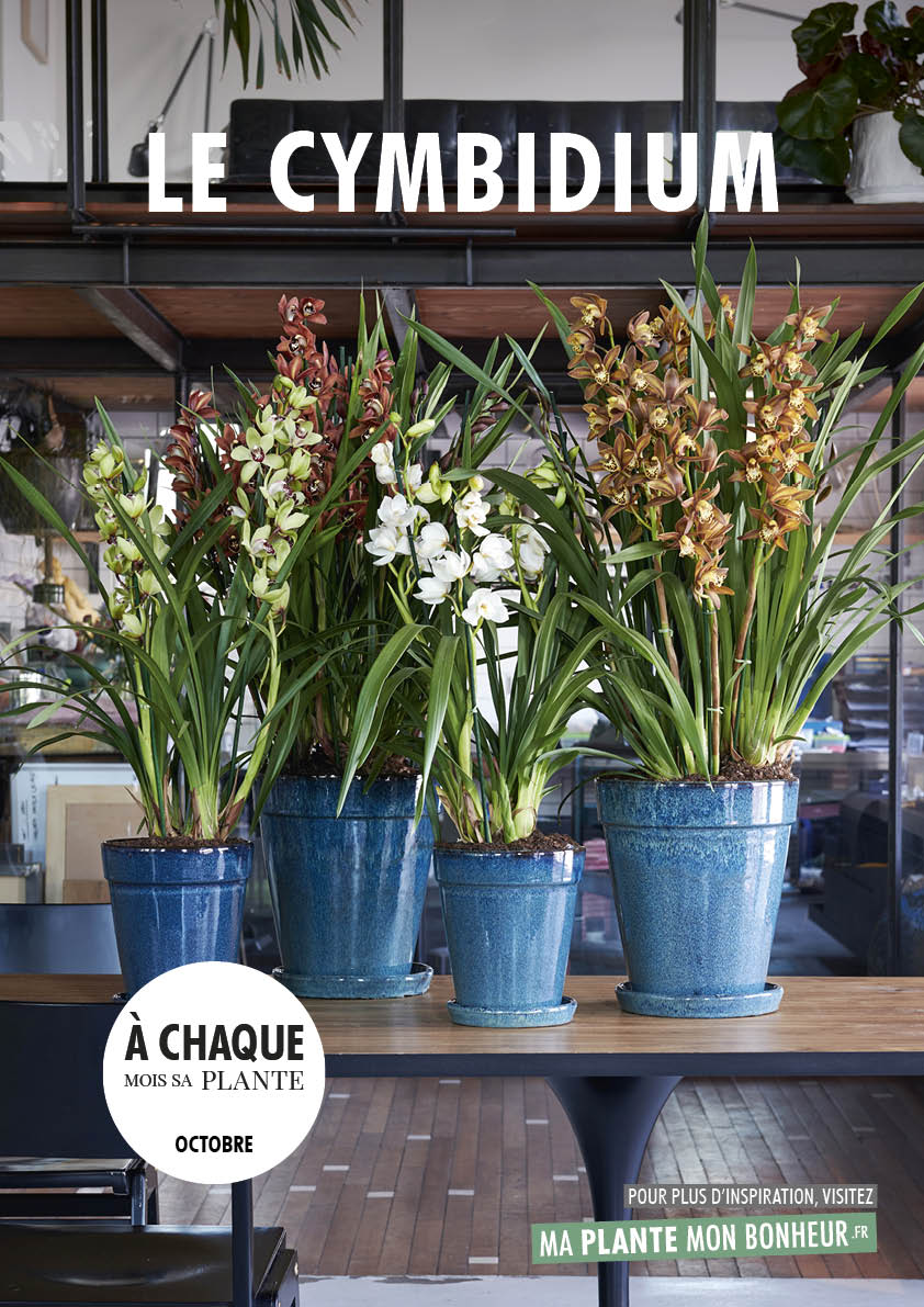 A chaque mois sa plante, octobre - le cymbidium