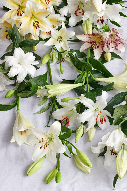 Le lys est dans l agenda des fleurs en juillet office for Site de fleurs