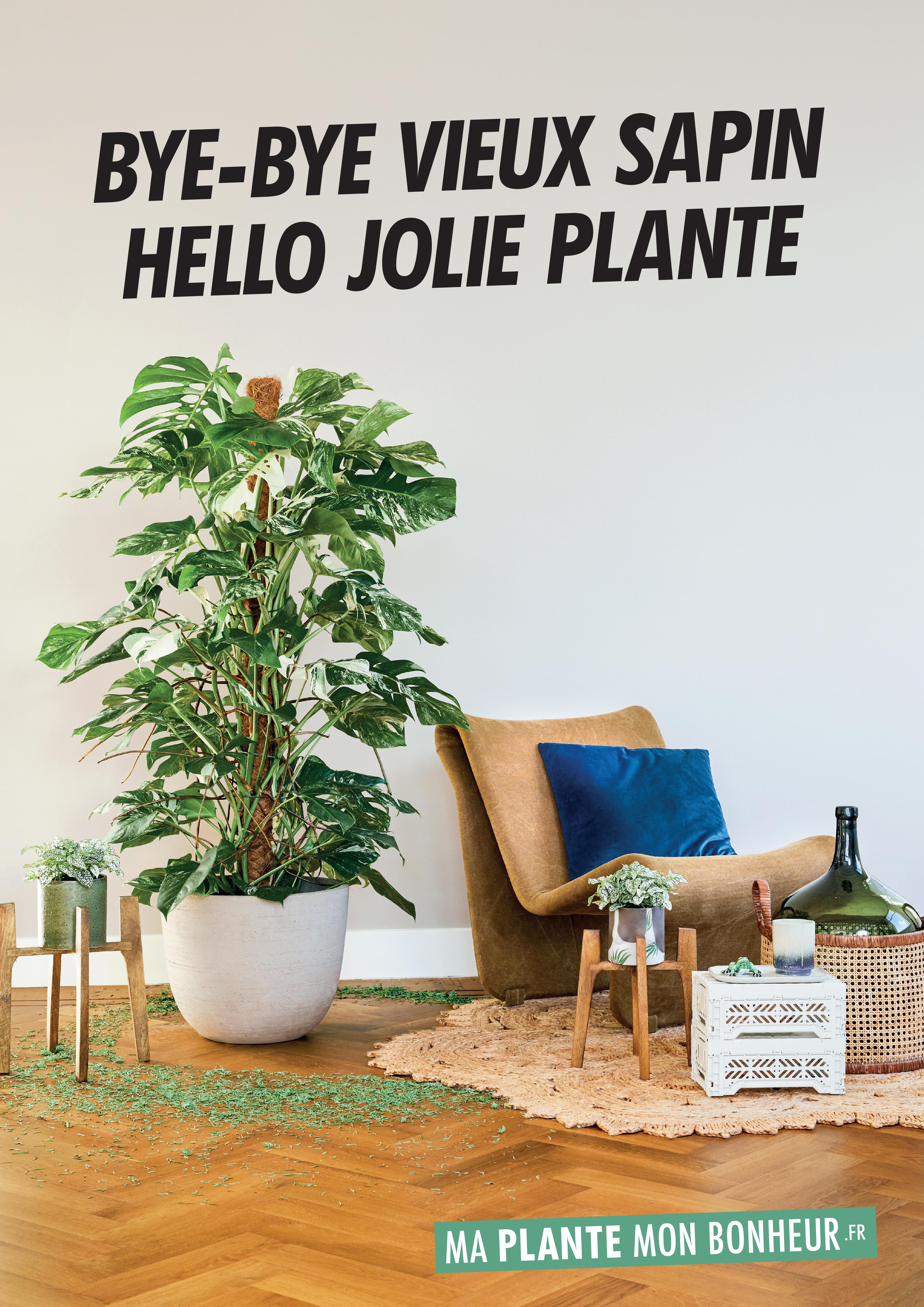 Plante D Intérieur Tendance bye bye vieux sapin, hello jolie plante édition 2019