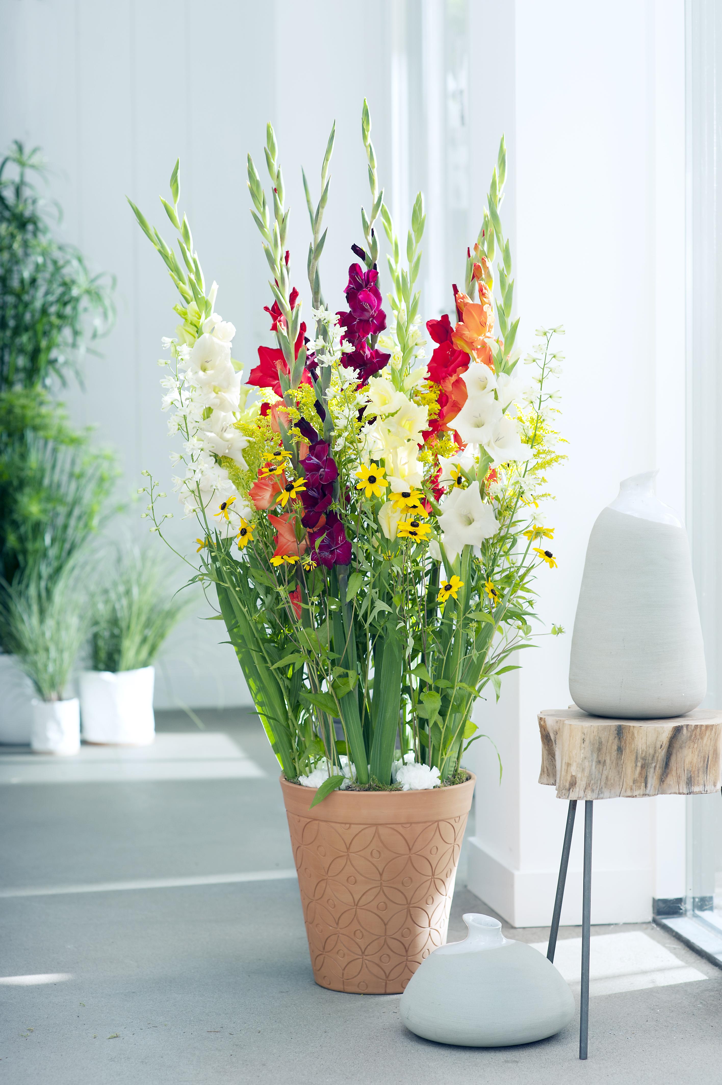 le gla eul le h ros du monde des fleurs office des fleurs. Black Bedroom Furniture Sets. Home Design Ideas