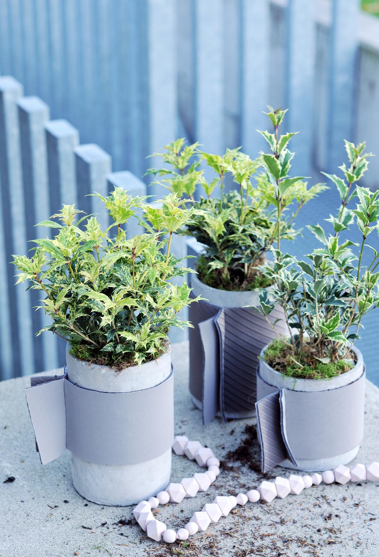 Plante de jardin du mois de novembre l osmanthus office - Jardin novembre ...
