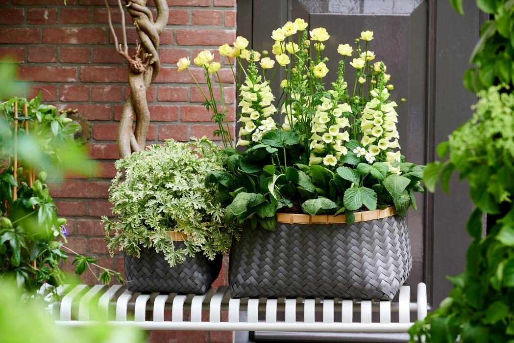 Plantes pour abeilles - Ferme urbaine