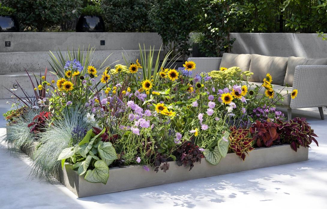 Plantes pour abeilles - Maxi