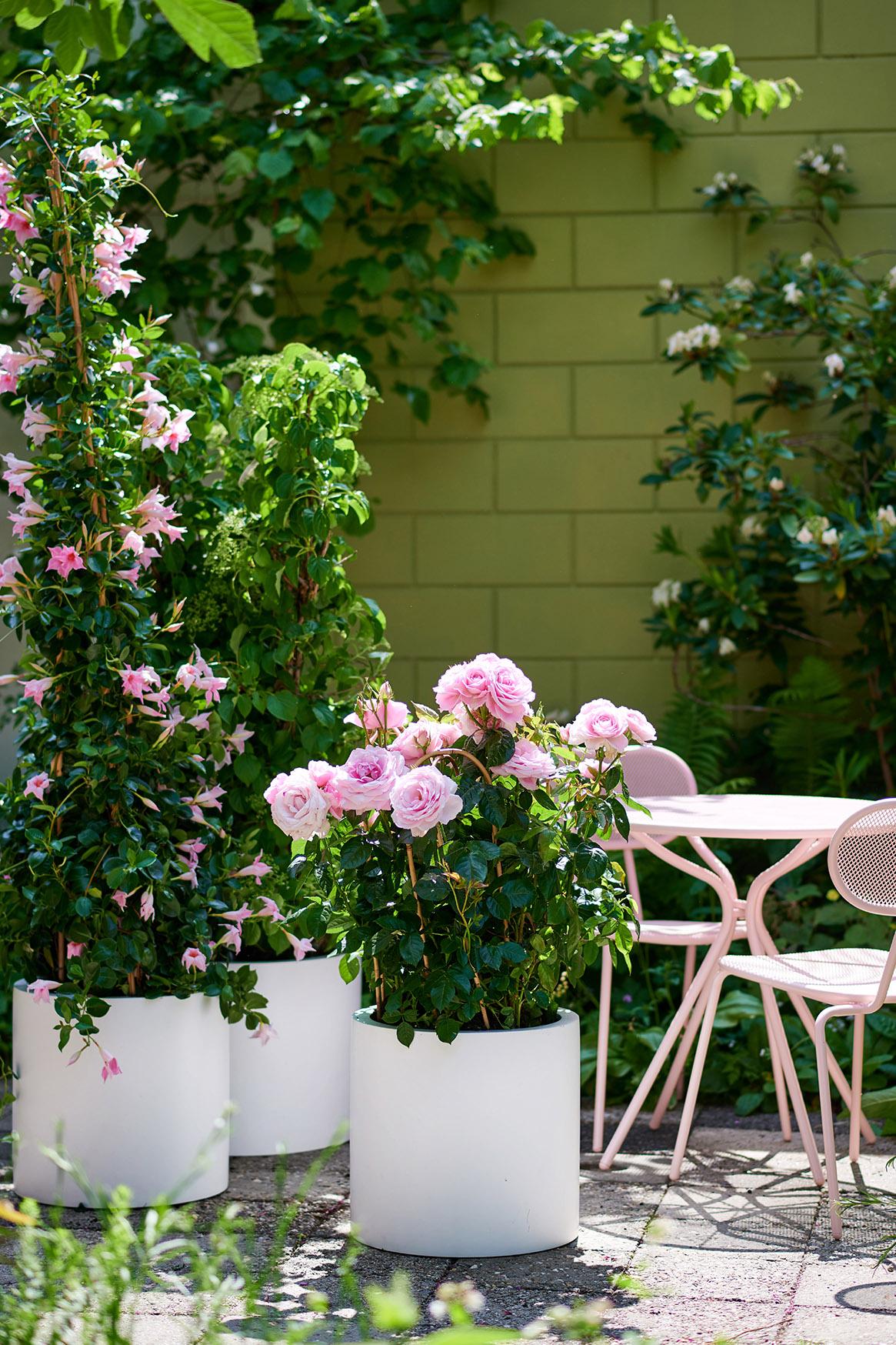 Plantes pour abeilles - Pink