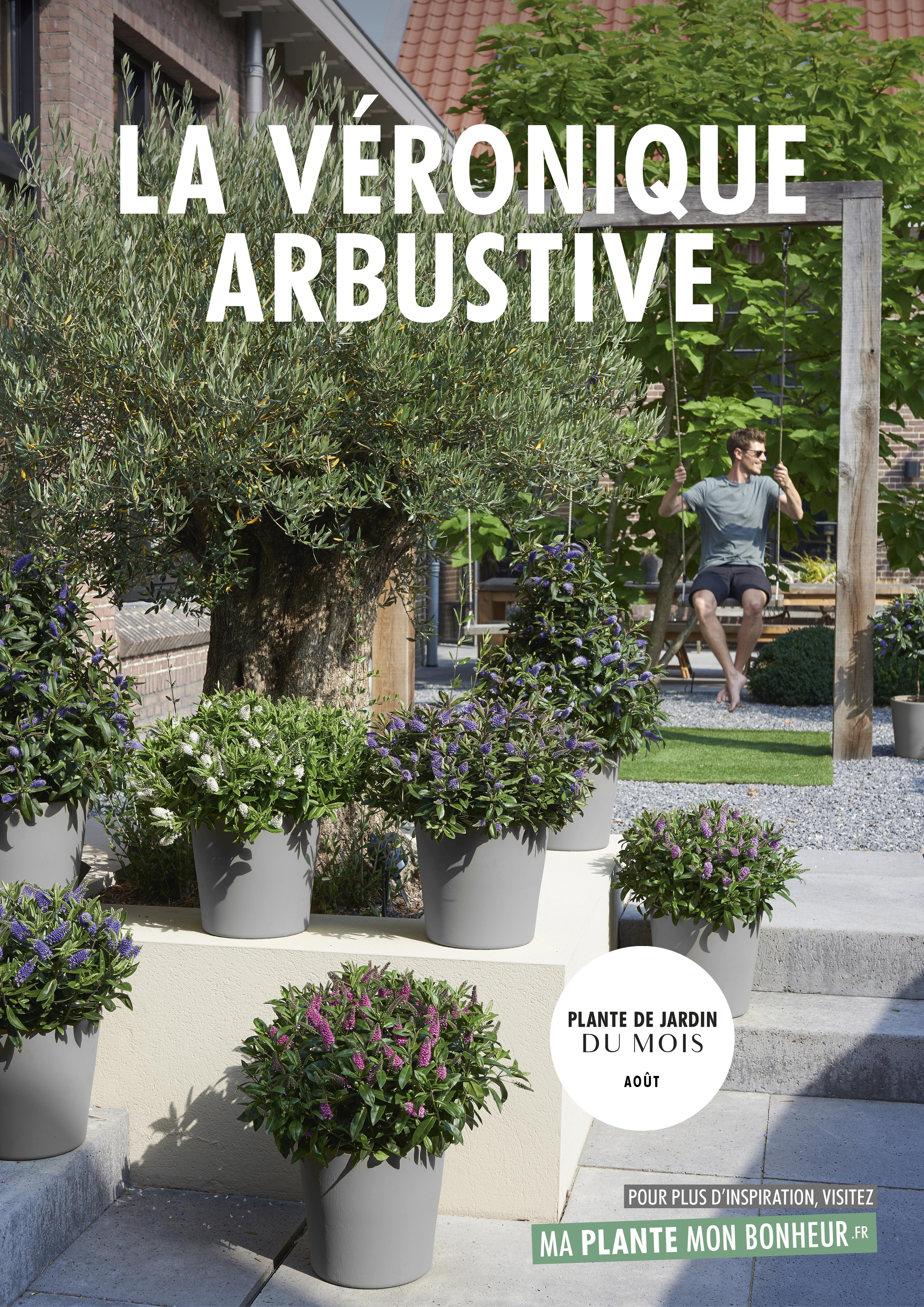 Quelle Plante En Pot Pour Terrasse plante de jardin du mois d'août : la véronique arbustive
