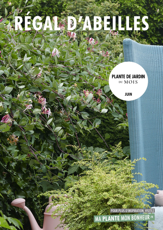 le Chèvrefeuille, plante de jardin du mois