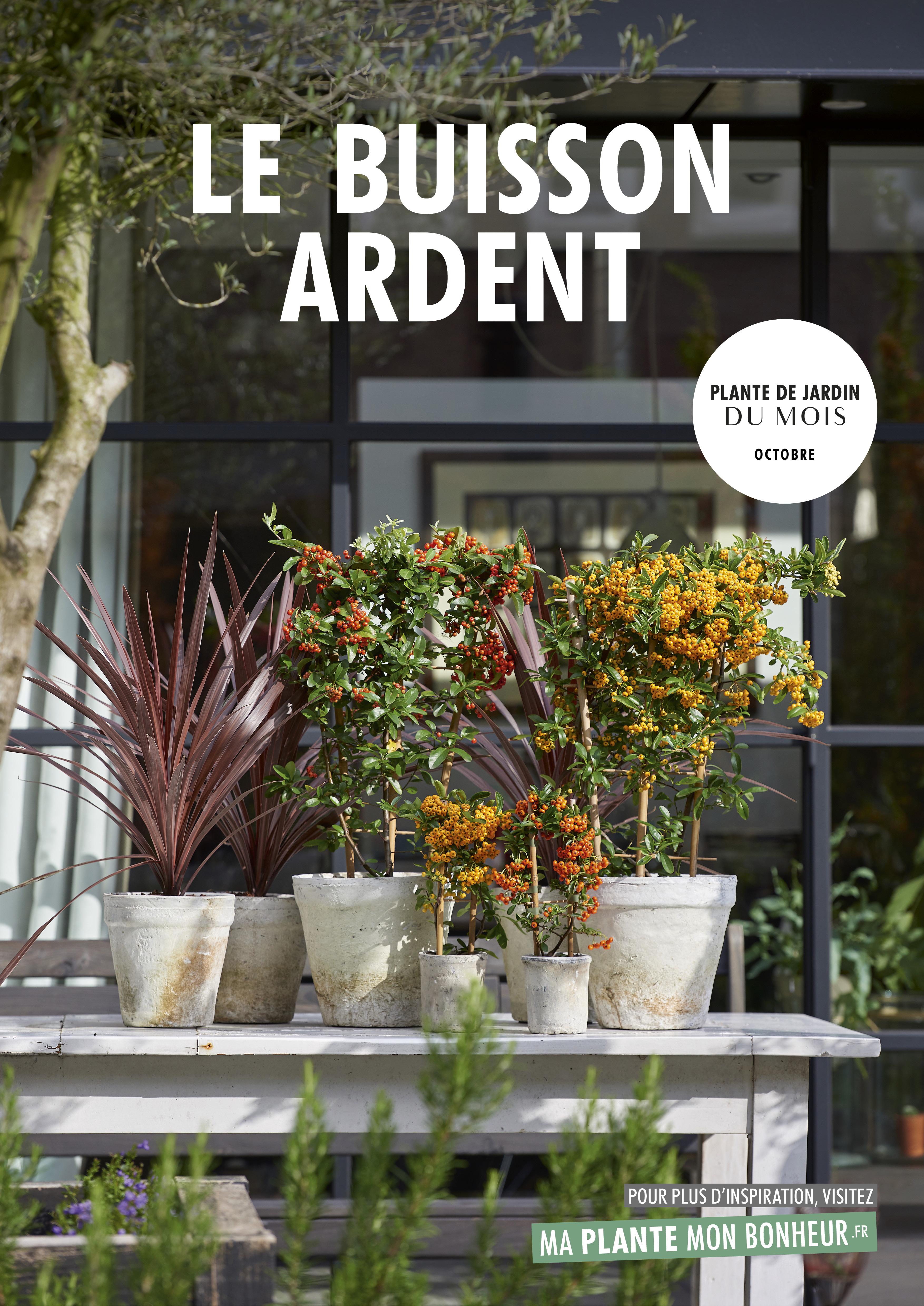 Plantes Pour Terrasse Sud Est plante de jardin du mois d'octobre 2018 : buisson ardent