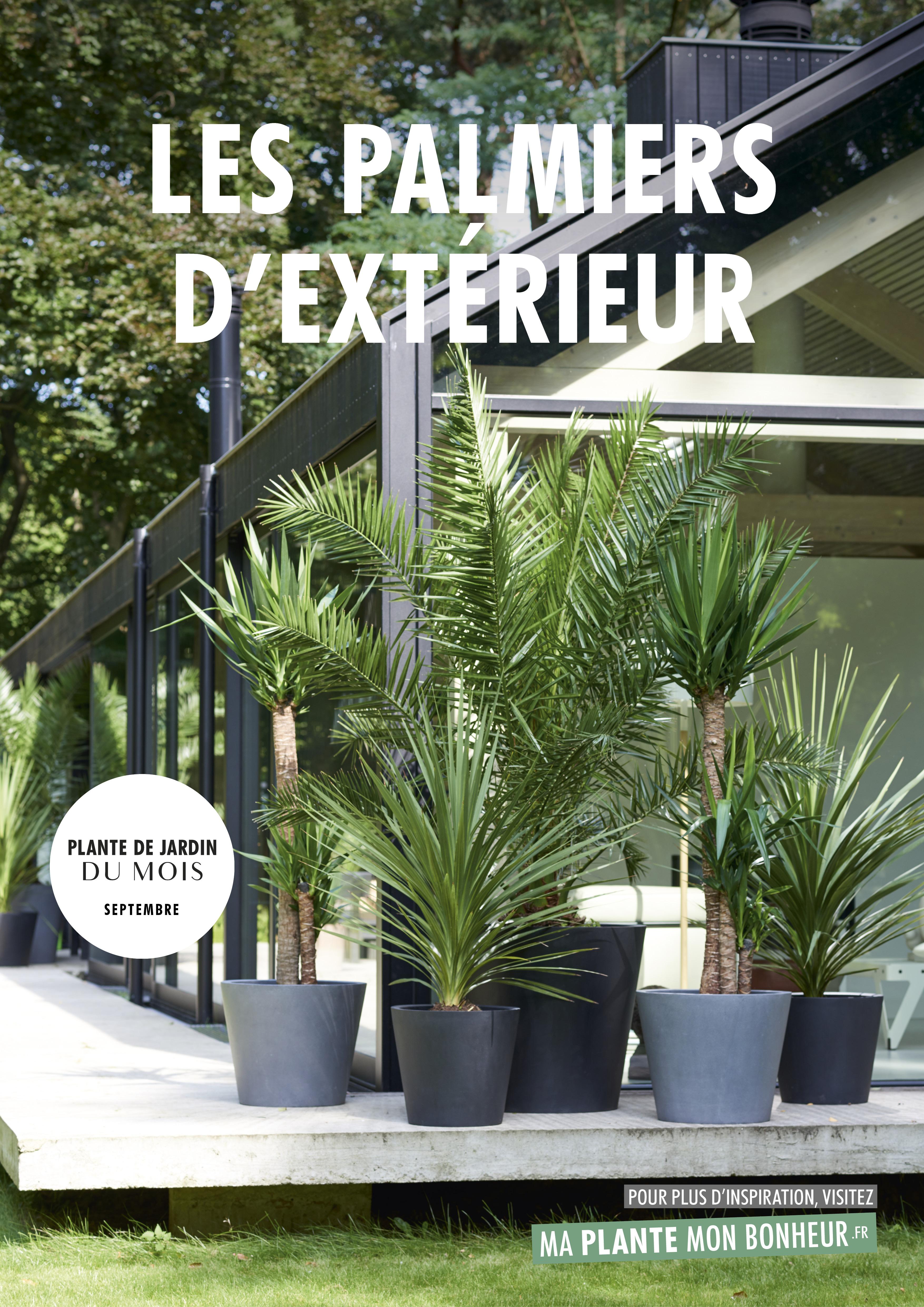 Plante A Planter En Septembre plante de jardin du mois de septembre: les palmiers d