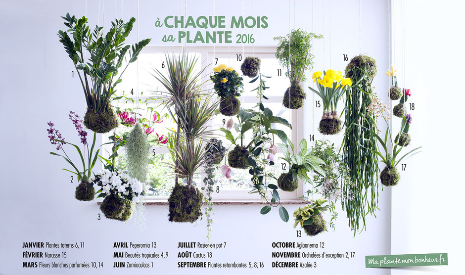 a chaque mois sa plante 2016 voici la liste des plantes office des fleurs. Black Bedroom Furniture Sets. Home Design Ideas