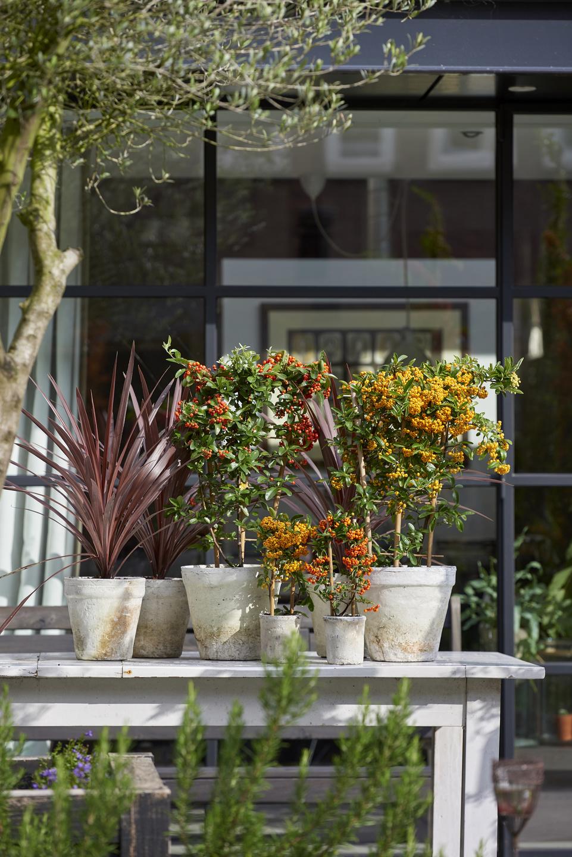 Jardinsouverts Open Gardens Calendrier Douvertures