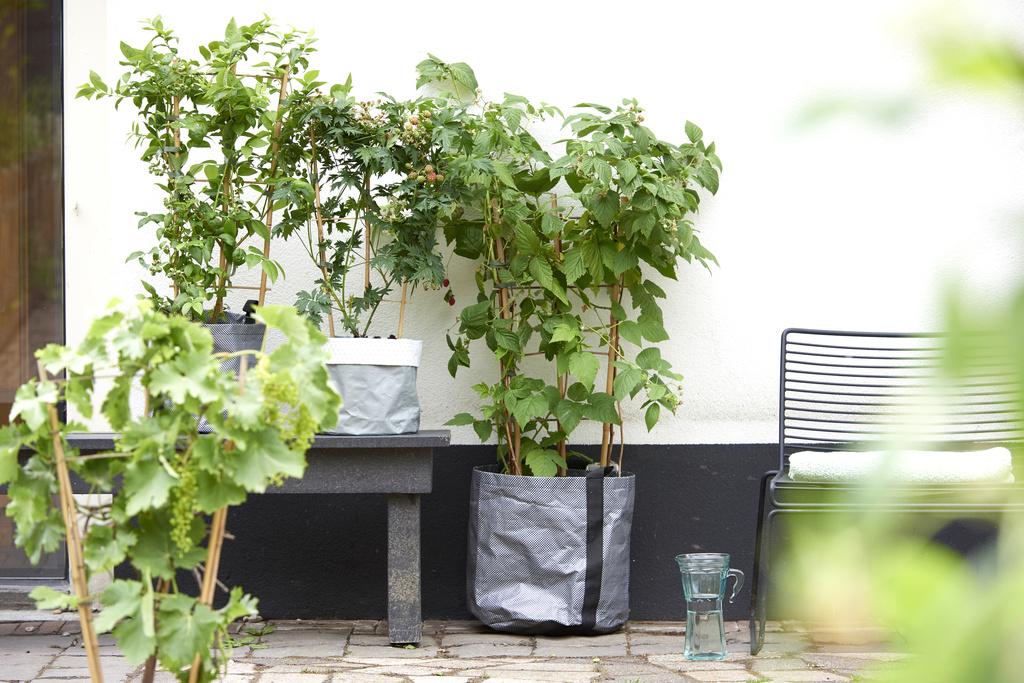 plante grimpante grece