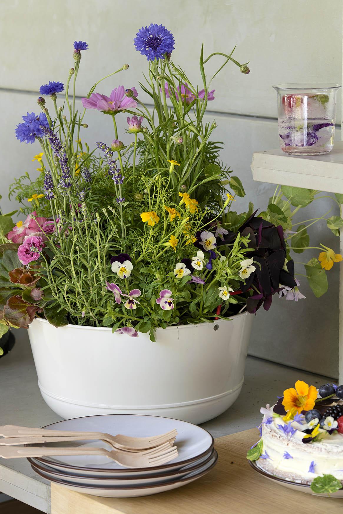Fleurs pour les abeilles 2021 - Jardin gourmand