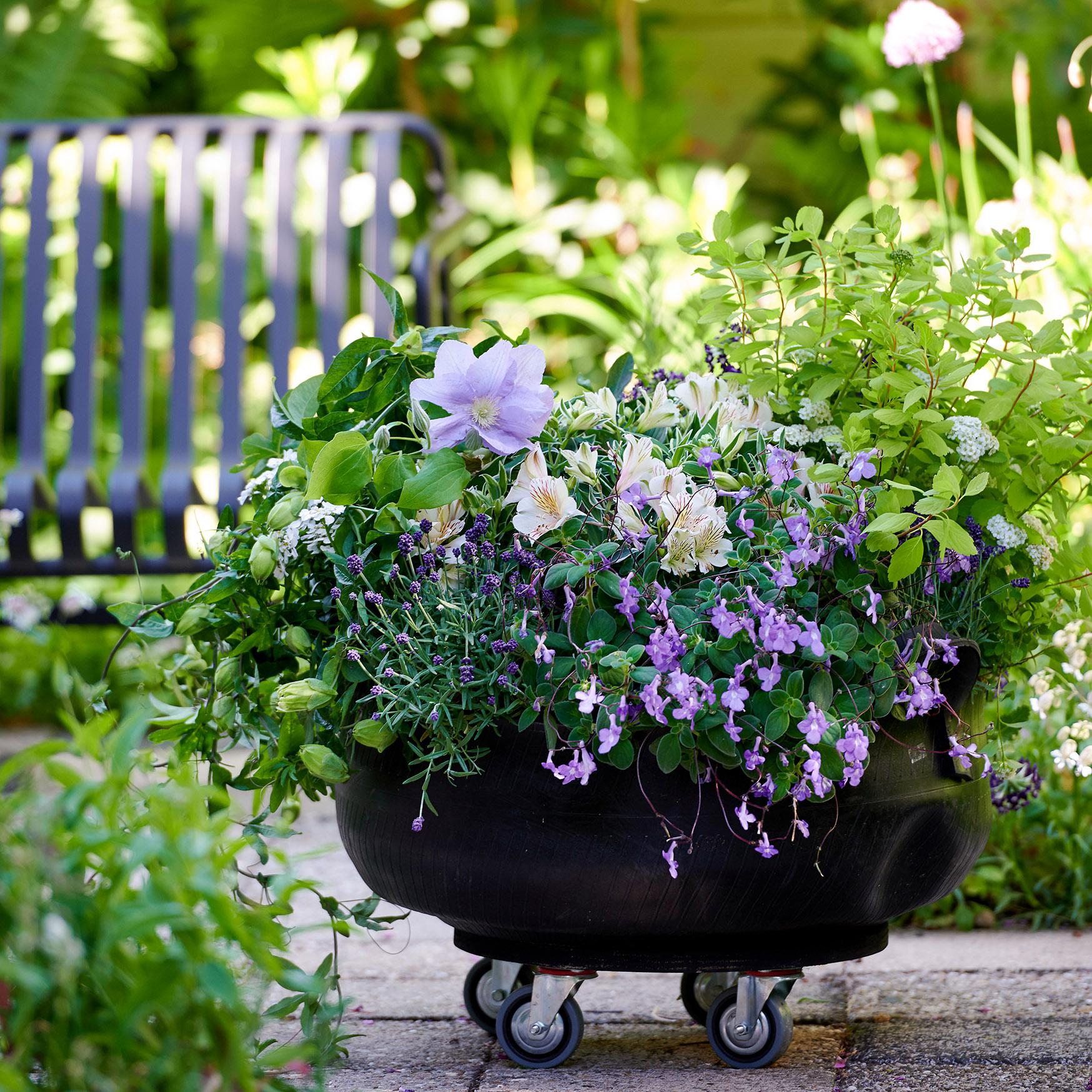 Fleurs pour les abeilles 2021 - Jardin d'été