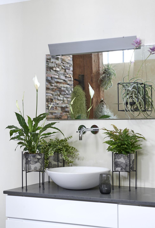 Plante Pour Salle De Bain  Bright Shadow Online