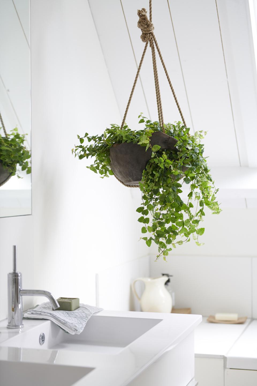 Les Filles De L Air Plante a chaque mois sa plante, mai : les plantes pour salle de