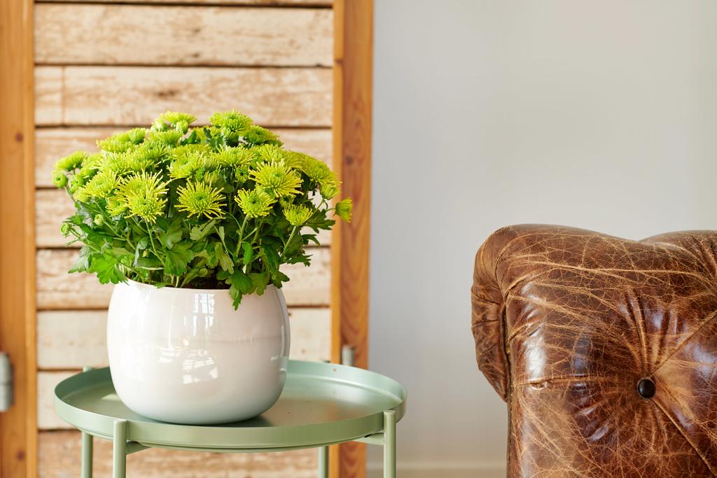 A chaque mois sa plante juin le chrysanth me office for Plante 6 mois