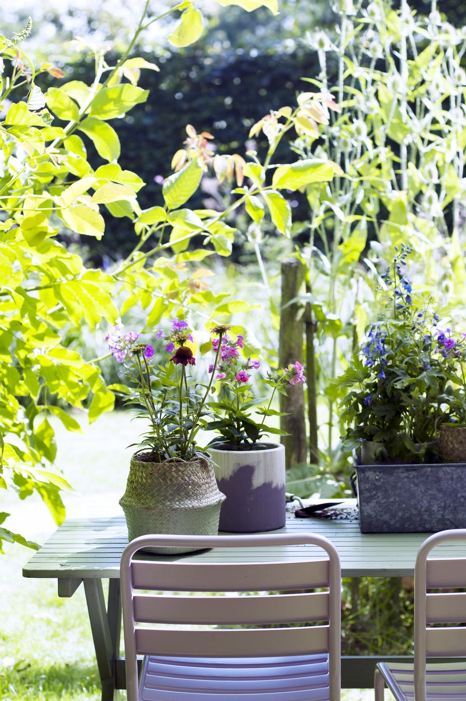 Les plantes de jardin du mois de juin les plantes vivaces fleuries d t office des fleurs - Plantes vivaces fleuries ...